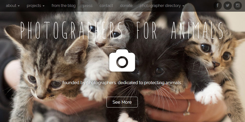 Photographers for Animals